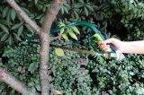 """24本の"""" Bowsawの弓を切り取る庭の切削工具の鋼鉄弓のこは見た"""