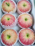 Plante et fleur artificielles des fruits artificiels Gu-Jy601155433