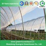 Serre chaude agricole de FIM de plastique pour la tomate Plantring