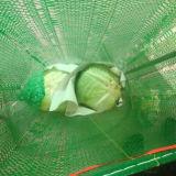 Хорошее качество Свежие капуста из Китая