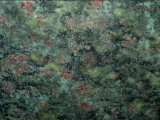 Granit vert de corail