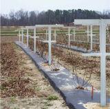 ガラス繊維のラズベリーのトレリスシステム農業アプリケーション