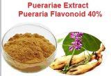 Estratto Pueraria15% di Puerariae