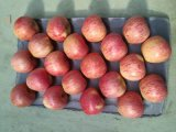 Qualitäts-rote Farbe Qinguan Apple