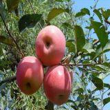 Rood - heerlijk Vers Apple