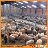 Rete fissa galvanizzata tuffata calda dell'iarda delle pecore di alta qualità
