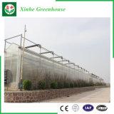 야채 또는 정원 또는 꽃 또는 농장 다중 경간 폴리탄산염 장 온실