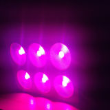 Switchable Grennhouse LED Grow Lighting 430W COB LED Growlight