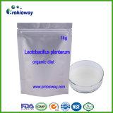 Lactobacillus plantarum probiotiques poudre alimentation biologique de produits de soins de santé
