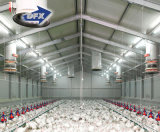 Instalación sencilla estructura de acero de la construcción de la casa de aves de corral/cerdo Casa Establo