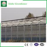 PC 장 또는 유리제 플레스틱 필름 딸기 로즈를 위한 직류 전기를 통한 관 녹색 집