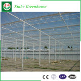 Serre van het Glas van de Spanwijdte van de Landbouw van de Tomaat van Venlo de Multi Brede/Enige voor Verkoop