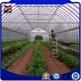 Парник Пластмасс-Пленки Vegetable Multi-Пяди аграрный используемый для сбывания