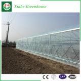 현대 농업 플랜트를 위한 다중 경간 필름 온실