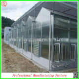 Multi-Span Vegetable pratico Seeds Greenhouse con Automatic Control System