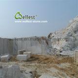Tegel van Gx van de Eigenaar van de steengroeve M500 de Witte Marmeren voor Muur en het Behandelen en de Bekleding van de Vloer
