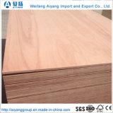 AA Grade Bintangor/Okoume enfrentan los álamos comercial básico para la decoración y muebles de madera contrachapada