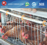 Q235 Aço bridge da camada de frango da bateria do compartimento de ovos de galinha
