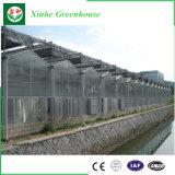 Folha de PC Multi-Span emissões para cultivo hidrop ico