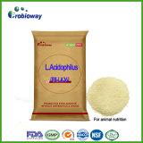 Le Lactobacillus Acidophilus Probiotiques prémélange de poudre d'alimentation de la nutrition animale