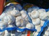 aglio di bianco di Normal&Pure dell'imballaggio del sacchetto della maglia 5kg