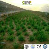 Gli standard globali hanno incontrato il comitato monocristallino solare 345W per i progetti verdi della centrale elettrica