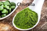 Biokost-frische organische Chlorella
