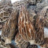 Morel Pac le meilleur de champignons séchés Morchella