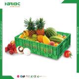 Grande cassa di verdure di plastica di trasporto