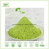 Qualitäts-Gersten-Gras-Saft-Puder