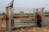 Ambasciatore resistente Cattle Crush/compressione della mucca/scivolo del bestiame