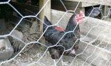 직류 전기를 통한 철사 그물세공 /Chicken 6각형 철사 6각형 철망사 제조