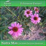 (100% pur) echinacée Extract avec 4%Polyphenols pour Healthcare