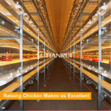 Tianrui design automatic broiler battery cage for 60000 broilers