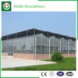 Folha de policarbonato comercial para os produtos hortícolas Estufa/frutas