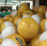 大きいサイズ昇進のための膨脹可能なPVCビーチボール