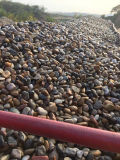 自然なマルチカラー庭を舗装するための楕円形の小石の石