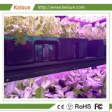Растения Keisue со светодиодной лампы на заводе по мере роста