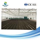 Maoyuan Klärschlamm-entwässernmaschine für Cassawa Stärke-Abwasserbehandlung