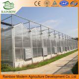 La agricultura Multi Span láminas de policarbonato para la siembra de efecto invernadero