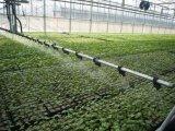El fertilizante orgánico del aminoácido del 80%, el 100% soluble en agua, Omri certificó