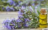 Petróleo de Rosemary natural de la alta calidad de la fuente de la fábrica con mejor oler