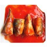 Os peixes enlatados assépticos saudáveis enlataram o vegetal enlatado do alimento enlatado de pasta de tomate