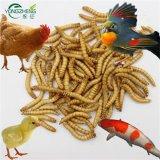 Продуктов питания с высоким содержанием белка для ПЭТ сушеные Mealworms