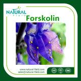 健康Product ForskolinのColeusのForskohliiのプラントExtract&#160からのForskolinの粉;