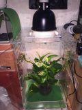 La pantalla de Reptiles de acrílico Crested gran tanque