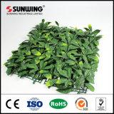 Planta verde protegida ultravioleta del seto verde para los ornamentos del jardín