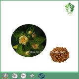 Alkaloid-Gewicht-Verlust des Sida Cordifolia Auszug-10%