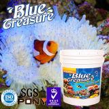 열대 물고기 해양 생물