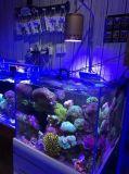 Las luces alejadas especiales del acuario del modelo 60W / 90W con el Ce RoHS
